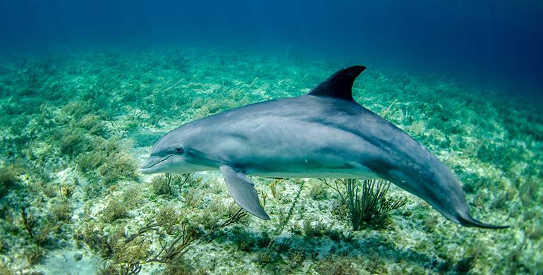 Un translator pentru delhini
